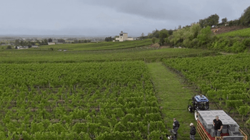 video-prezentacija-vinogradnika-Chateau-Faugeres_12